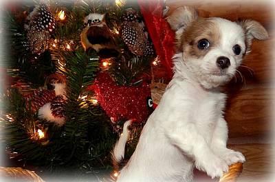 Chihuahua Digital Art - Xmas Puppy 2 by Lynn Griffin