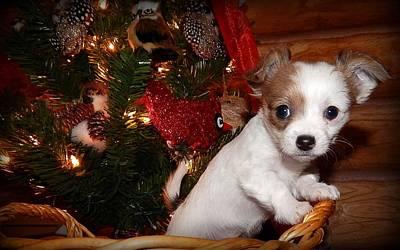 Chihuahua Digital Art - Xmas Puppy by Lynn Griffin