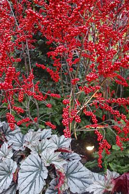 Photograph - Xmass Berries by Joan Reese