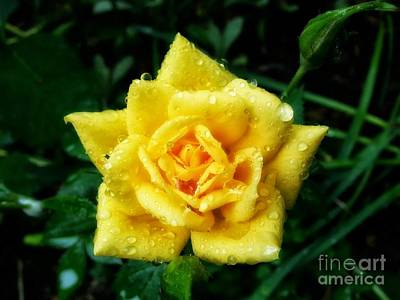 Photograph - Y-rose by Heather L Wright