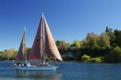 Yacht Fearless On Lake Taupo  Art Print by Venetia Featherstone-Witty