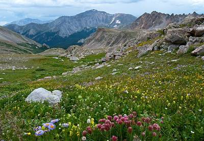 Photograph - Yale Peak With Wildflowers by Cascade Colors