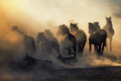 Herding Dog Photograph - Ya?lka? by Murat Bakmaz