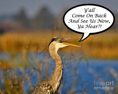 Photograph - Yall Come On Back Heron Card by Al Powell Photography USA