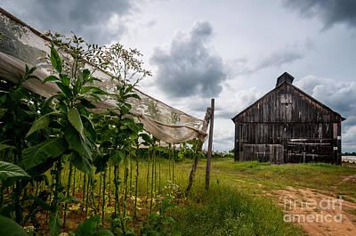 Yankee Farmlands No 7 - Barn On Shade Tobacco Farm Art Print