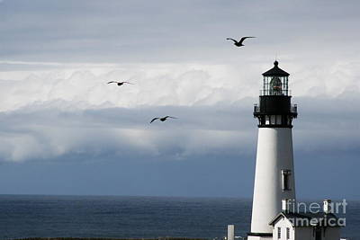 Yaquina Head Flyers Fifty Three Print by Donald Sewell