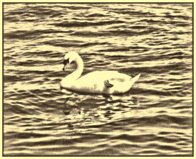 Photograph - Ye Olde Swan by Shawn Dall