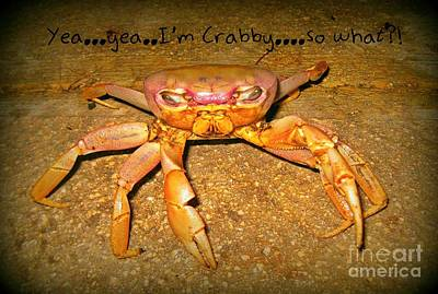 What Is Life Digital Art - Yea I Am Crabby So What by John Malone