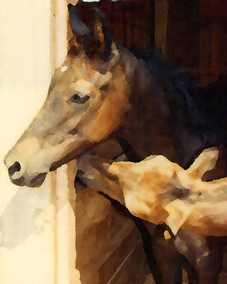 Yearling Colts Original