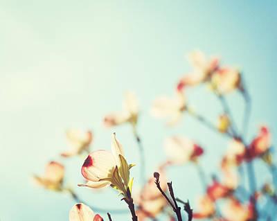 Peach Photograph - Yearning by Carolyn Cochrane