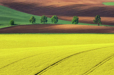 Dirt Photograph - Yellow by Ales Komovec