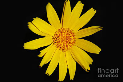 Photograph - Yellow by Alyce Taylor