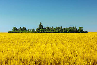 Surreal Landscape Photograph - Yellow And Blue Make Green by Todd Klassy