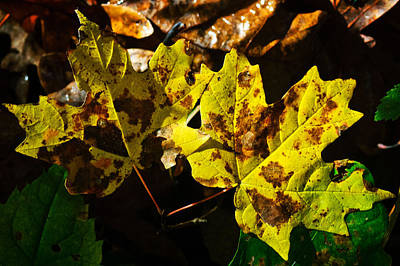 Photograph - Yellow And Brown by George Taylor