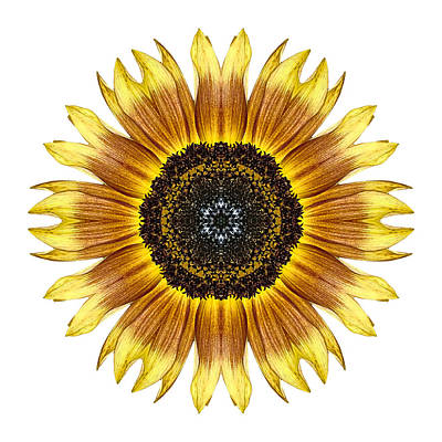 Photograph - Yellow And Brown Sunflower I Flower Mandala White by David J Bookbinder