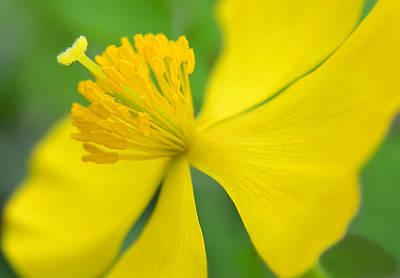 Wall Art - Photograph - Yellow And Green by Jack Daulton