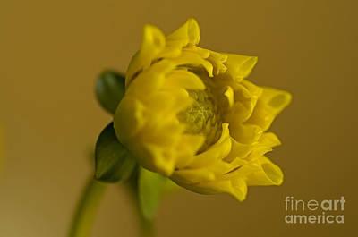 Yellow And Green Art Print by Nick  Boren