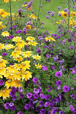 Photograph - Yellow And Purple Flowers by Carol Groenen