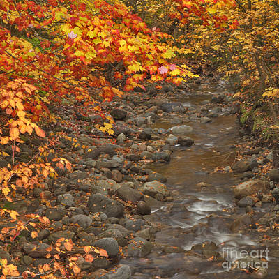 Brook Photograph - Yellow And Red And The Stream by Charles Kozierok