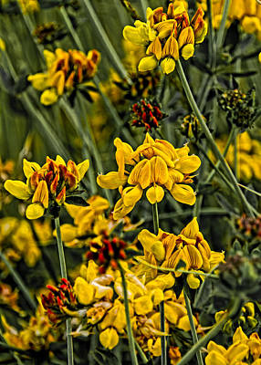 Photograph - Yellow And Red by David Stine
