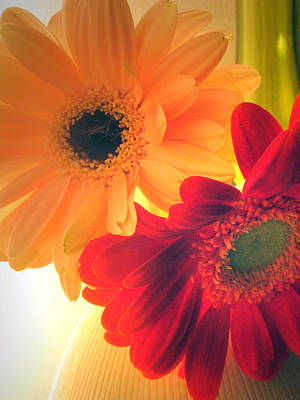 Photograph - Yellow And Red Gerberas by Amber Nissen