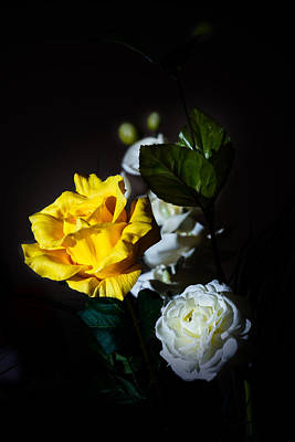 Art Print featuring the photograph Yellow And White by Cecil Fuselier