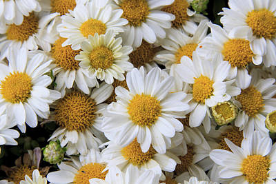 Photograph - Yellow And White by Richard Smith