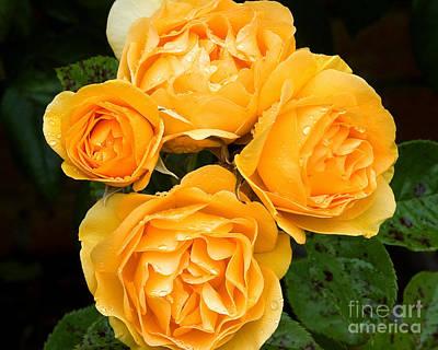 Photograph - Yellow Beauties II by Chuck Flewelling