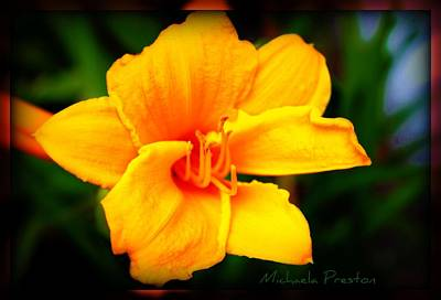 Photograph - Yellow Beauty by Michaela Preston
