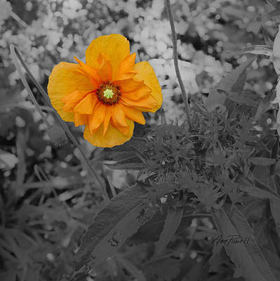 Photograph - Yellow Beauty On A Square - Photography by Ann Powell