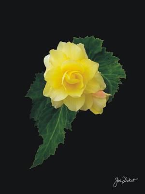Photograph - Yellow Begonia by Joe Duket