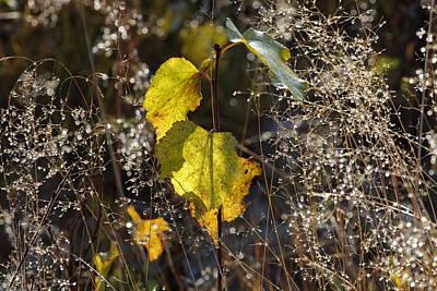 Lucille Ball - Yellow birch sapling by Ulrich Kunst And Bettina Scheidulin