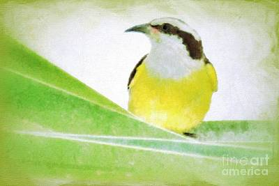 Photograph - Yellow Bird by Darla Wood