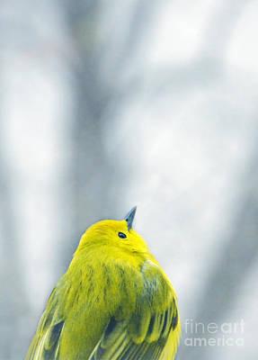 Photograph - Yellow Bird by Jill Battaglia