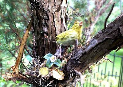 Photograph - Yellow Bird by Peggy King
