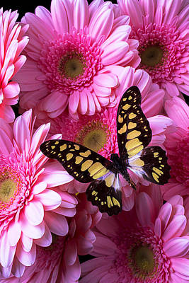 Gerbera Daisy Photograph - Yellow Black Butterfly by Garry Gay