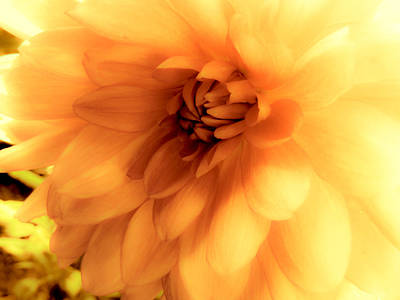 Photograph - Yellow Bloom by Connie Dye