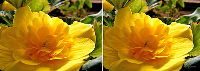 Photograph - Yellow Blossom In Stereo by Duane McCullough
