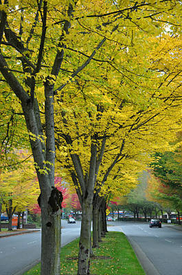 Photograph - Yellow Boulevard by Kirt Tisdale