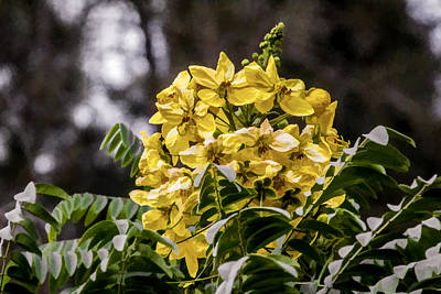 Digital Art - Yellow Bouquet  by Photographic Art by Russel Ray Photos