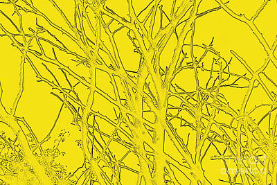 Yellow Branches Art Print by Carol Lynch