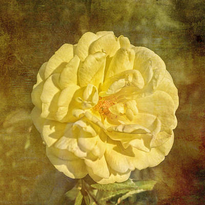 Photograph - Yellow Brick Road Rose by Marianne Campolongo