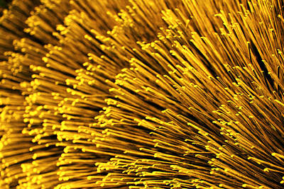 Photograph - Yellow Bristles by Robert Woodward