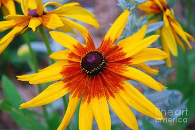 Art Print featuring the photograph Yellow Burst by Allen Beatty