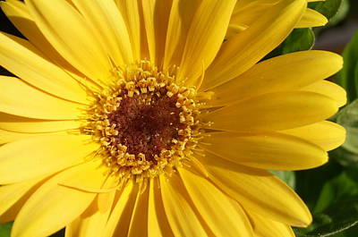 Yellow Burst Of Flower Art Print by Brian Jones