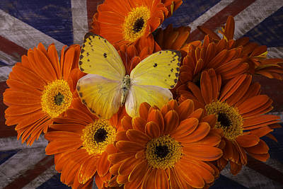 Gerbera Daisy Photograph - Yellow Butterfly Among Orange Daises by Garry Gay