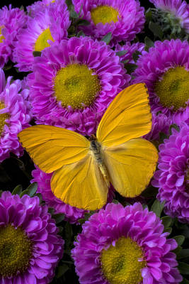 Yellow Butterfly And Pink Flowers Art Print by Garry Gay