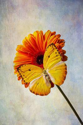 Gerbera Daisy Photograph - Yellow Butterfly Beauty by Garry Gay
