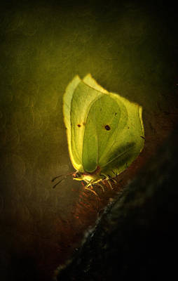 Yellow Butterfly Sitting On The Moss  Art Print by Jaroslaw Blaminsky