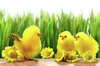 Photograph - Yellow Chicks Hiding In The Grass by Sandra Cunningham